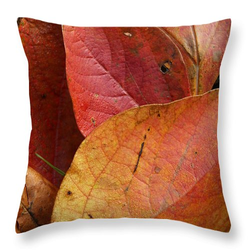 Leaf Throw Pillow featuring the photograph Sassafras Autumn by Anne Ditmars