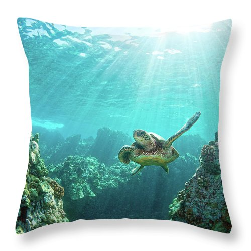 Underwater Throw Pillow featuring the photograph Sea Turtle Coral Reef by M.m. Sweet