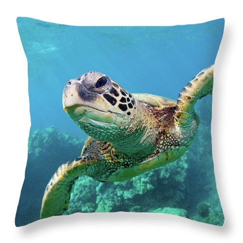 Underwater Throw Pillow featuring the photograph Sea Turtle, Hawaii by M Swiet Productions