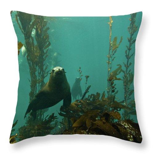 Sea Lion Throw Pillow featuring the photograph Sealion by Douglas Klug