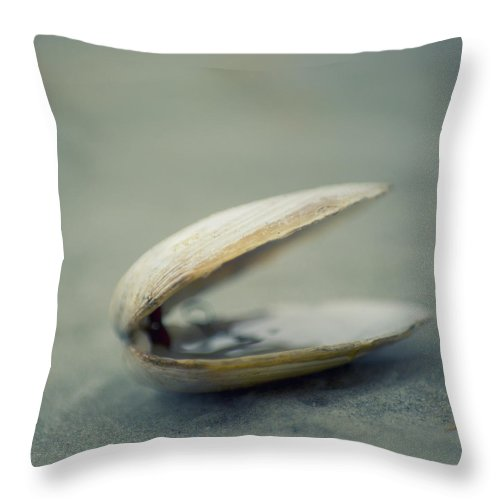 Animal Shell Throw Pillow featuring the photograph Shell by Jill Ferry Photography