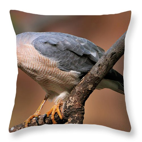 Ranthambore National Park Throw Pillow featuring the photograph Shikra by Copyright@jgovindaraj