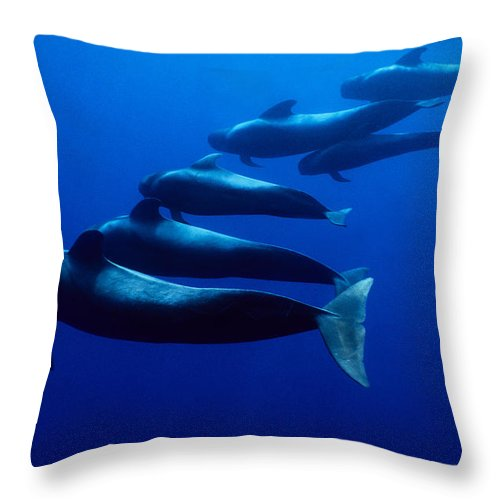 Underwater Throw Pillow featuring the photograph Short-finned Pilot Whales, Globicephala by Gerard Soury