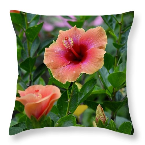Hibiscus Pair Throw Pillow featuring the photograph Show Off. by Laurie Hein