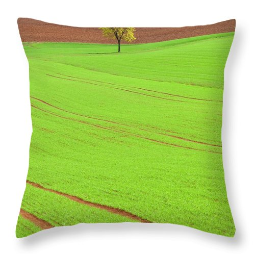 Outdoors Throw Pillow featuring the photograph Single Tree In Green Field by Henglein And Steets