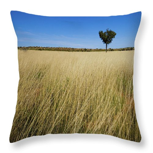Scenics Throw Pillow featuring the photograph Small Single Tree In Field by Universal Stopping Point Photography