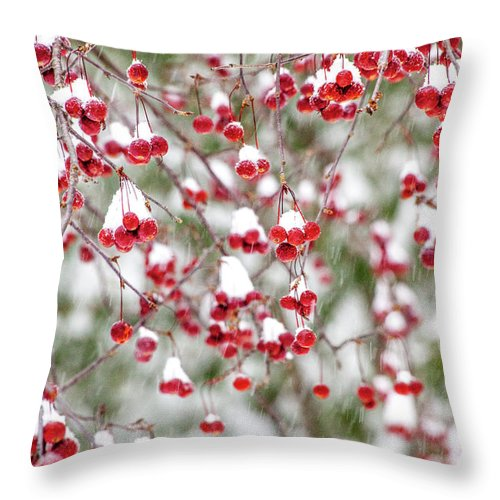 Winter Throw Pillow featuring the photograph Snow Covered Red Berries by Trevor Slauenwhite