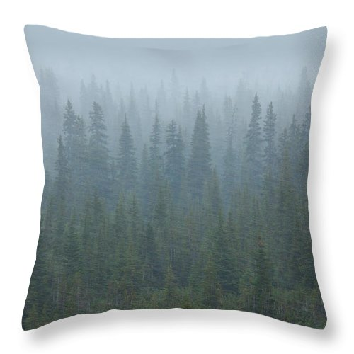 Unesco Throw Pillow featuring the photograph Snow Storm In The Forests Of Jasper by Mint Images/ Art Wolfe