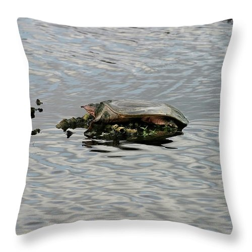 Soft Shell Turtle Throw Pillow featuring the photograph Soft Shell Turtle by Anthony Jones