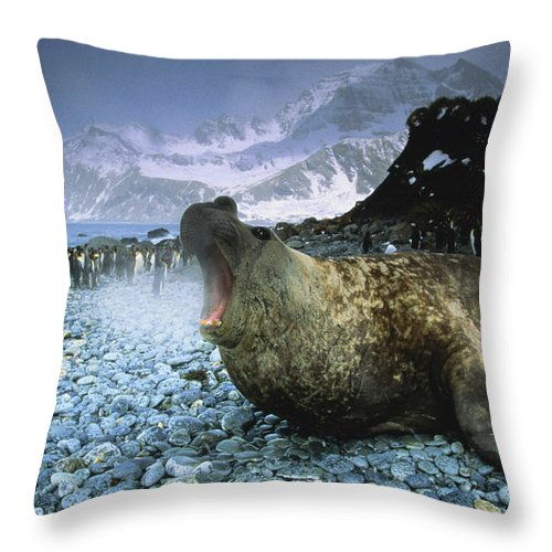 Snow Throw Pillow featuring the photograph Southern Elephant Seal Mirounga Leonina by Art Wolfe