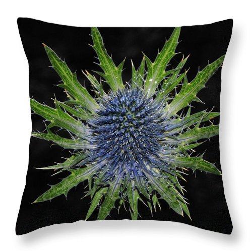 Insect Throw Pillow featuring the photograph Spider by Love Photography