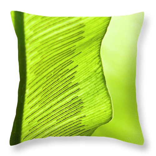 Outdoors Throw Pillow featuring the photograph Spores Of A Fern by By Ken Ilio