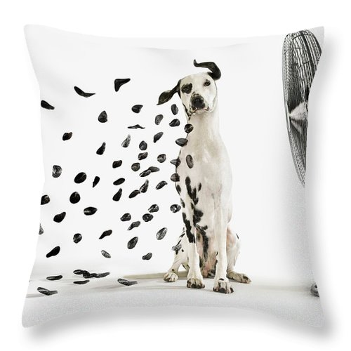 Pets Throw Pillow featuring the photograph Spots Flying Off Dalmation Dog by Gandee Vasan