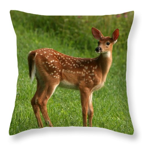 Grass Throw Pillow featuring the photograph Spotted Fawn by Spiraling Road Photography
