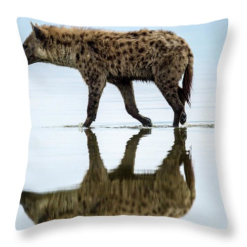 Kenya Throw Pillow featuring the photograph Spotted Hyena Looking For Weak Flamingos by Manoj Shah