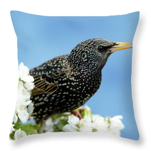 Songbird Throw Pillow featuring the photograph Star In Springtime by Schnuddel