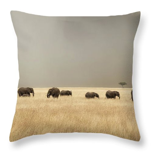 Mara Throw Pillow featuring the photograph Stormy Skies Over The Masai Mara With Elephants And Zebras by Jane Rix