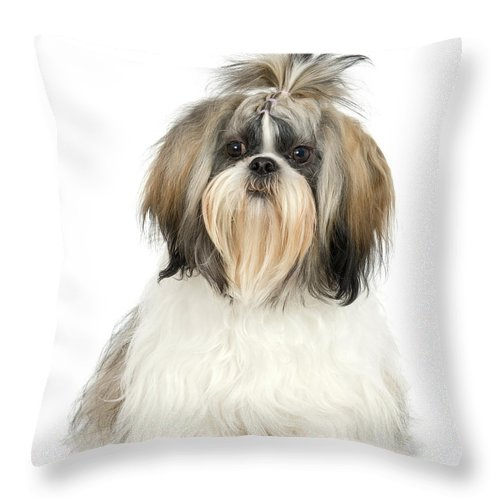 Pets Throw Pillow featuring the photograph Studio Portrait Of Shih Tzu Dog by Jupiterimages