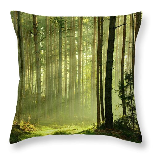 Scenics Throw Pillow featuring the photograph Sunbeams Breaking Through Pine Tree by Avtg