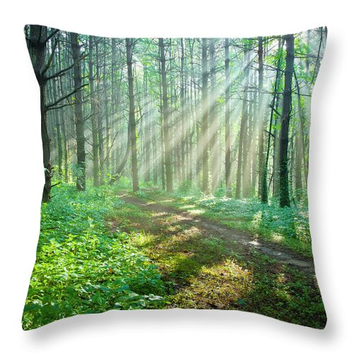 Outdoors Throw Pillow featuring the photograph Sunbeams Filtering Through Trees On A by Drnadig