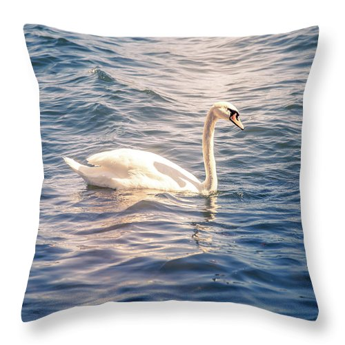 Swan Throw Pillow featuring the photograph Swan by Nicklas Gustafsson