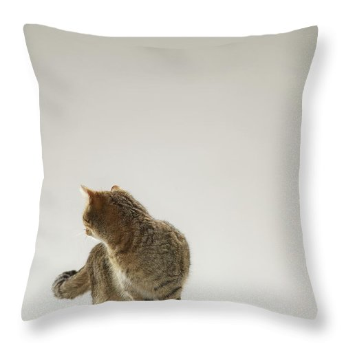 Pets Throw Pillow featuring the photograph Tabby Cat Looking Behind by Michael Blann