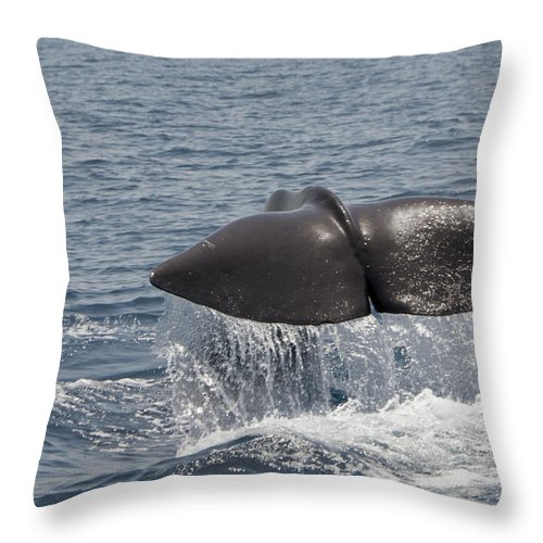 Spray Throw Pillow featuring the photograph Tail Of A Whale by Lingbeek