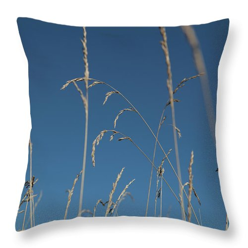 Tranquility Throw Pillow featuring the photograph Tall Grasses Swaying Against A Blue Sky by Lauren Krohn
