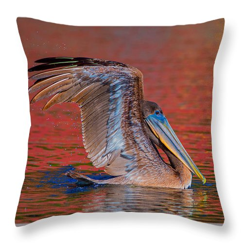 Louisiana Throw Pillow featuring the photograph Tchefuncte Pelican by Tom Gresham