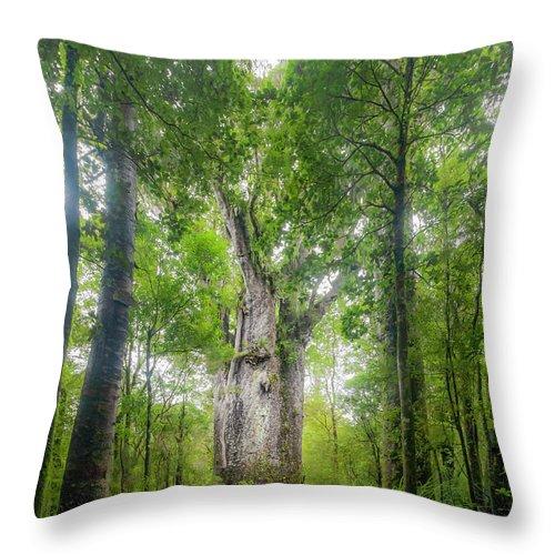 Tropical Tree Throw Pillow featuring the photograph Te Matua Ngahere, Giant Kauri Tree by Kim Westerskov
