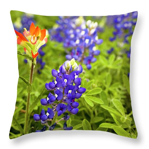 Orange Color Throw Pillow featuring the photograph Texas Bluebonnets In Spring Meadow by Fstop123