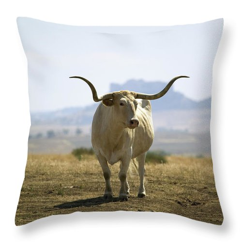 Horned Throw Pillow featuring the photograph Texas Longhorn by Joseph Sohm-visions Of America