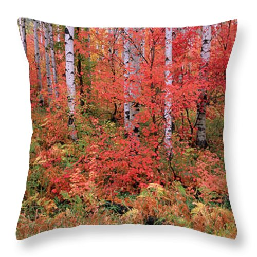 Panoramic Throw Pillow featuring the photograph The Wasatch Mountain Forest Of Maple by Mint Images - David Schultz