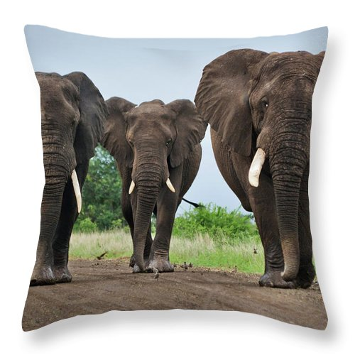Toughness Throw Pillow featuring the photograph Three Big Elephants On A Dirt Road by Johansjolander
