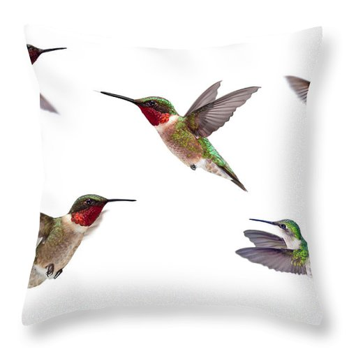 White Background Throw Pillow featuring the photograph Three Ruby Throated Hummingbirds by Cglade