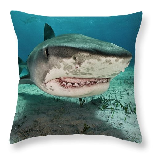Underwater Throw Pillow featuring the photograph Tiger Sharks Galeocerdo Cuvier Are by Rodrigo Friscione