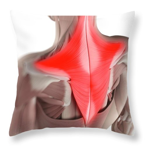 White Background Throw Pillow featuring the digital art Trapezius Muscle, Artwork by Sciepro