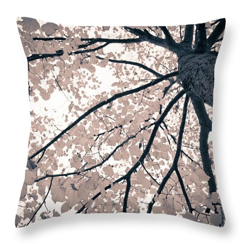 Spray Throw Pillow featuring the photograph Tree Branches by Gianlucabartoli