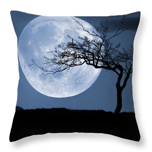 Scenics Throw Pillow featuring the photograph Treelight by Victor Walsh Photography