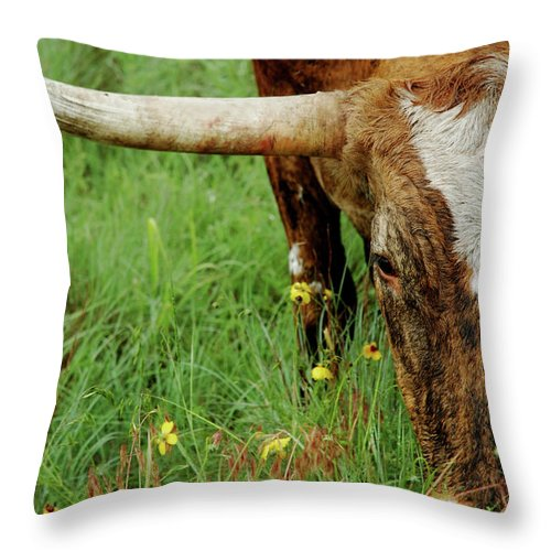 Horned Throw Pillow featuring the photograph True Texas Longhorn by Flashpoint