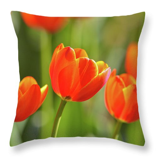 Flowerbed Throw Pillow featuring the photograph Tulip by Ithinksky