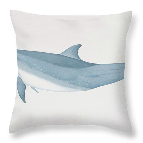 White Background Throw Pillow featuring the digital art Tursiops Truncatus, Bottlenose Dolphin by Martin Camm