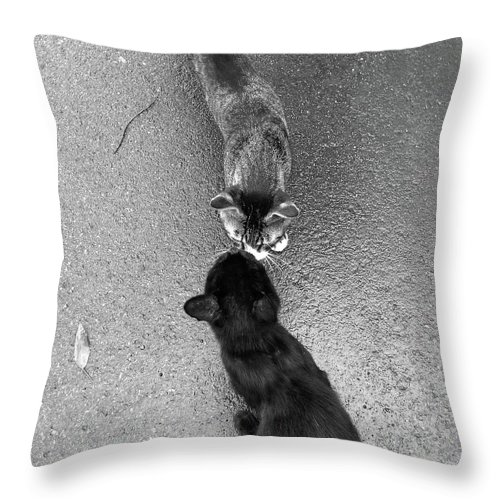 Pets Throw Pillow featuring the photograph Two Kittens Which Kiss by Photographer, Loves Art, Lives In Kyoto