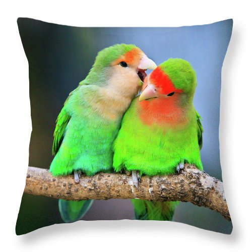 Togetherness Throw Pillow featuring the photograph Two Peace-faced Lovebird by Feng Wei Photography