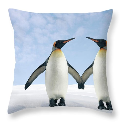 Animal Themes Throw Pillow featuring the photograph Two Penguins Holding Hands by Fuse