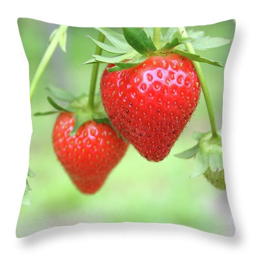 Juicy Throw Pillow featuring the photograph Two Ripe Red Strawberries On The Vine by Hohenhaus