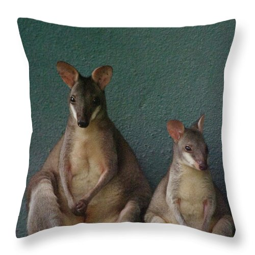 Animal Themes Throw Pillow featuring the photograph Two Sitting Wallabies by Ming Thein / Mingthein.com