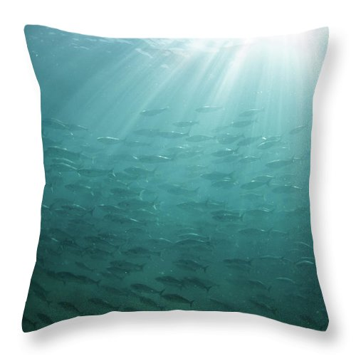 Freedom Throw Pillow featuring the photograph Underwater Light by Mark Tipple