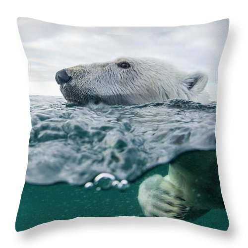 Paw Throw Pillow featuring the photograph Underwater Polar Bear In Hudson Bay by Paul Souders