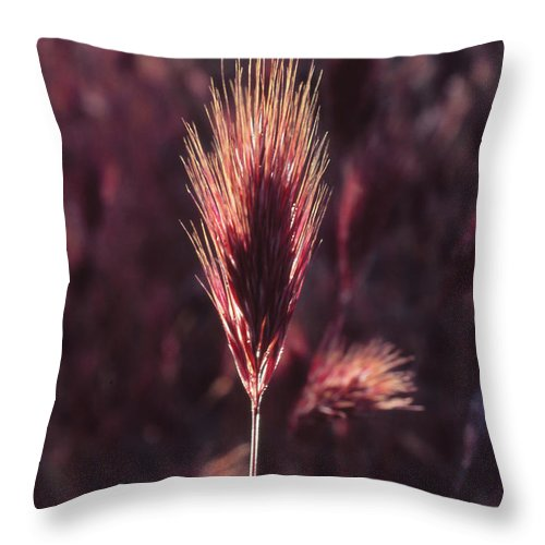 Throw Pillow featuring the photograph Untitled by Randy Oberg